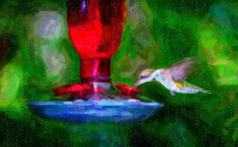 hummingbird-0912